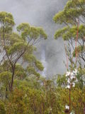 Franklin-Gordon Wild Rivers National Park, Tasmania Royalty Free Stock Photo
