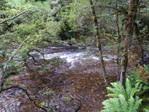 Franklin-Gordon Wild Rivers National Park, Tasmanien Lizenzfreies Stockbild