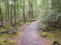Franklin-Gordon Wild Rivers National Park, Tasmanien Stockfotografie