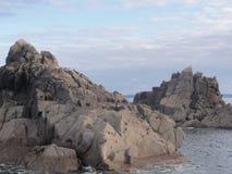 Frankreich - Morbihan - Insel Zusatz-oiseaux lizenzfreie stockfotos