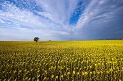 Frankreich - Provence stockbilder