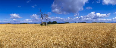 Frankreich - Provence lizenzfreie stockfotografie