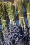Frankreich - Provence - Sault stockfotografie