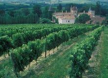 Frankreich: Wein-Regions-Bordeaux, Chardonay-Trauben-Plantage stockfotografie
