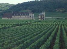 Frankreich: Wein-Regions-Bordeaux, Chardonay-Trauben-Plantage lizenzfreie stockbilder