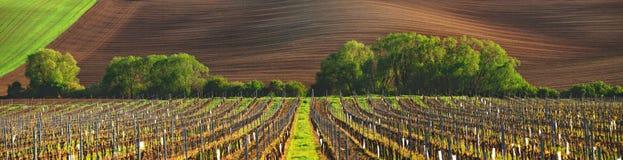 Frankreich-Weinberg stockfoto