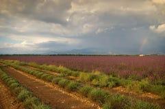 Frankrijk, die in de Provence, lavendelgebieden en regenboog na t gelijk maken Royalty-vrije Stock Afbeelding
