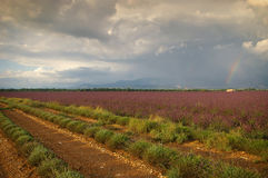 Frankrike, afton i Provence, lavendelfält och regnbåge efter t Royaltyfri Bild