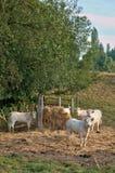 Frankrike den pittoreska byn av Brueil en Vexin Arkivbilder