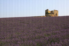 Frankrike, lavendelfält och lantgård Royaltyfria Foton