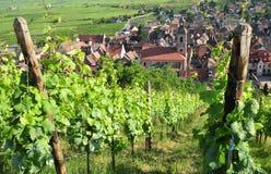 Frankrike pittoresk by av Riquewihr i Alsace Fotografering för Bildbyråer