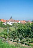 Frankweiler,german Wine Route,Germany Royalty Free Stock Images
