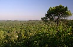 Frans boslandschap Stock Afbeelding