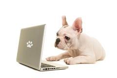 Frans buldogpuppy die op de vloer liggen die een labtop bekijken royalty-vrije stock foto's