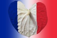 Frans embleem op een bloem stock foto's