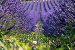Frans landschap - Drome stock afbeeldingen