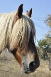 Frans zwaar paard stock afbeelding
