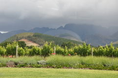 Franschhoek vineyards Cape South Africa  Stock Photos