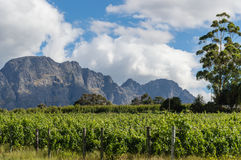 Franschhoek Royalty Free Stock Photography