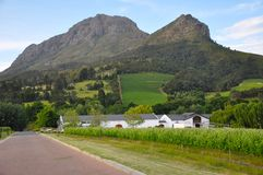 Franschhoek winelands home south africa. Winelands homestead in south africa vineyard scene Stock Photos