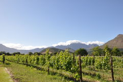 Franschhoek wine region south africa. Stock Image