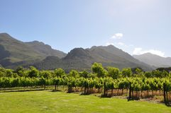 Franschhoek Cape French wine vineyards south afric. Franschhoek Caoe french wine winegrowingwinelands south africa Vineyards winery mountains country royalty free stock photo