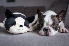 Franse buldog die met zijn teddy liggen Stock Fotografie