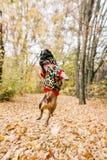 Franse buldog in het de herfstpark, Halloween royalty-vrije stock foto's