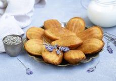 Franse koekjes Madeleine Royalty-vrije Stock Foto's