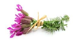 Franse lavendel Royalty-vrije Stock Afbeeldingen