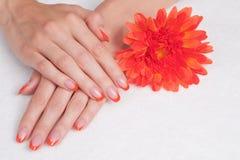 Franse manicure en oranje bloem Royalty-vrije Stock Foto