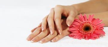 Franse manicure en roze bloem Royalty-vrije Stock Fotografie