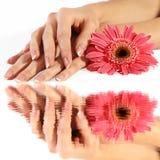 Franse manicure met bloem in bezinning Stock Foto