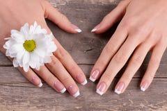 Franse manicure met witte chrysant stock afbeelding