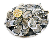 Franse oesters Stock Afbeelding