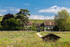 Franse Wijngaard Stock Afbeelding