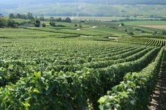 Franse Wijngaard royalty-vrije stock afbeeldingen