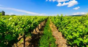 Franse wijngaarden royalty-vrije stock afbeeldingen