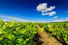 Franse wijngaarden royalty-vrije stock afbeelding
