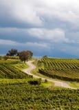 Franse wijngaardweg stock fotografie