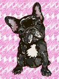 Fransk bulldogg Stock Illustrationer
