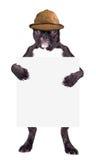Fransk bulldogg i beige hatt Arkivbild