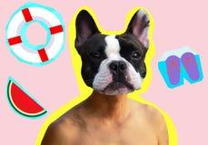 Fransk grop-tjur hund med den topless människokroppen i bakgrund för semester för lopp för vattenmelon för boj för collagesommarm stock illustrationer