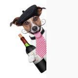 Fransk hund royaltyfri bild