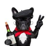 Fransk hund royaltyfri fotografi