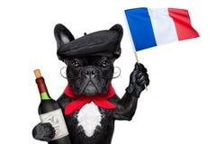 Fransk hund Arkivbild