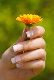 Fransk manicure royaltyfri fotografi