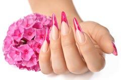 Fransk manikyr med rosa blommor royaltyfria foton