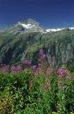 franska alps Royaltyfri Foto
