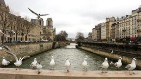 Franska fåglar Arkivbilder